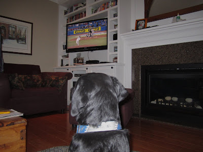This picture is taken from behind black lab puppy Romero's head as he is sitting on his dog bed in the middle of the living room watching the televsion. The tv is mounted in a white shelving unit in between a maroon chair and a gas fireplace. On the screen, the Toronto Blue Jays are playing their first game of the season, and Ricky Romero is pitching to one of the Minnesota Twins. Romero is looking at the screen and wearing his gray and blue Blue Jays collar.