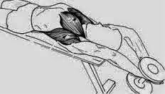 Membentuk Otot Dada Dengan Cepat