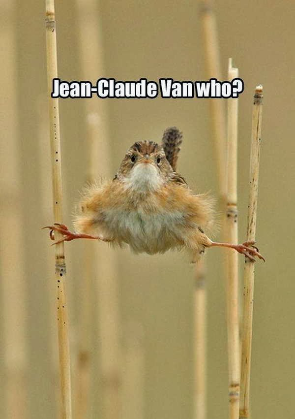 30 Funny animal captions - part 18 (30 pics), jean claude van who
