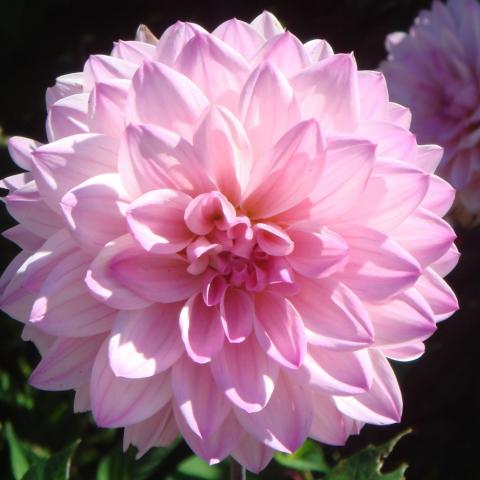 Buttery's Poetry Spot: .pretty little flower.  Flower