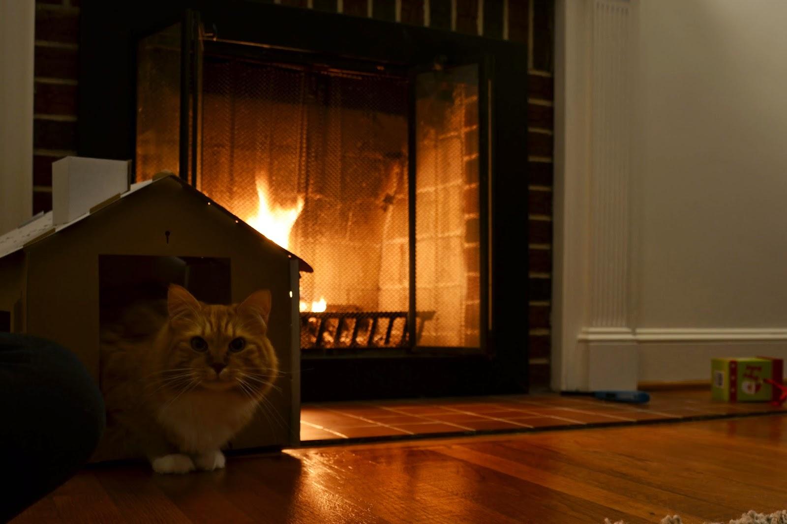 lostvestige cat photos friday 46 long exposure cat shots