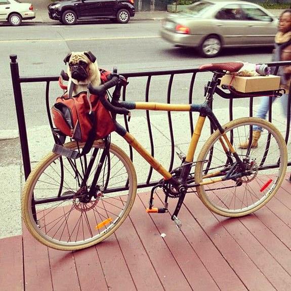 Pugs & Bikes