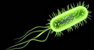 bakteri flagel silia