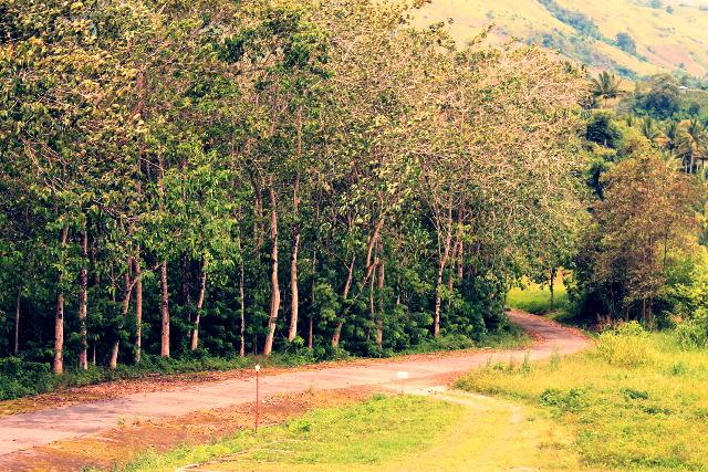 Trees, Polomolok