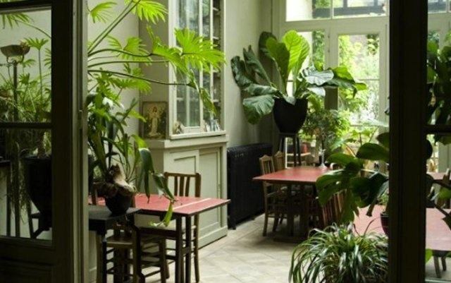 Tropical plants in the Home