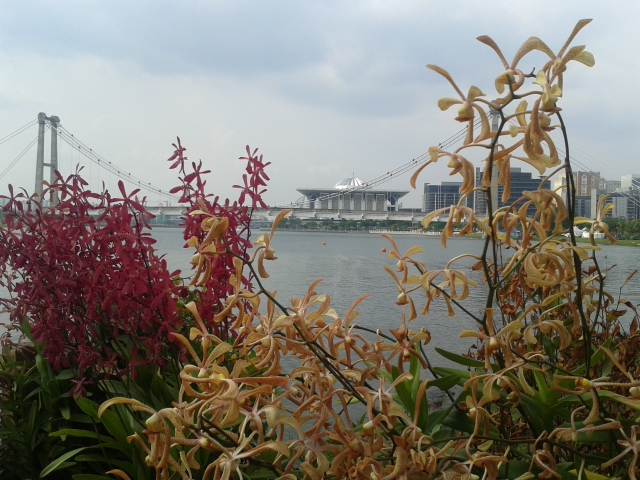 putrajaya-lake-orchids