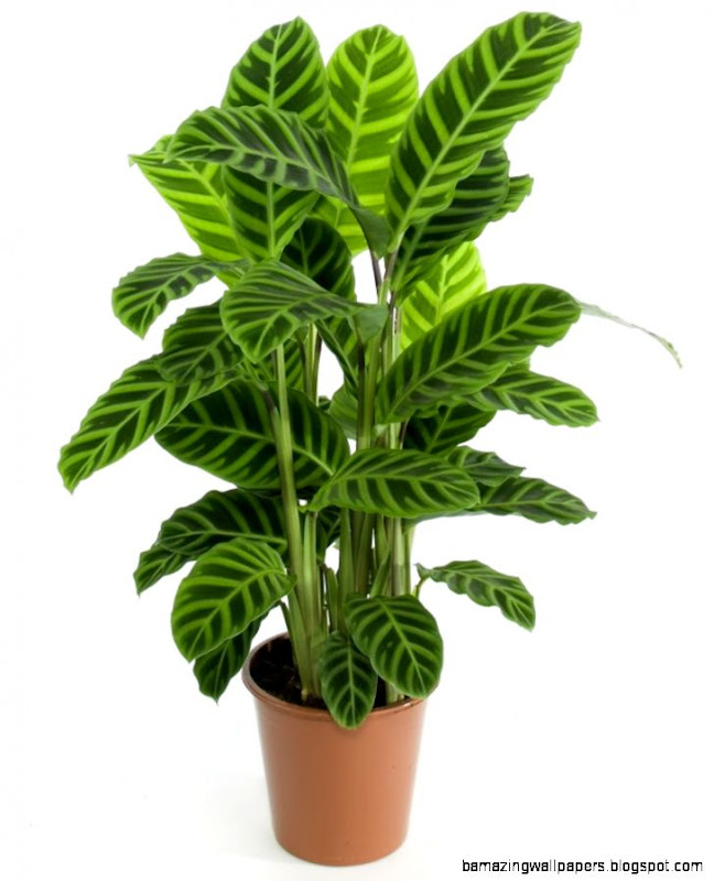 hanging house plants types 1  House Plants of the world