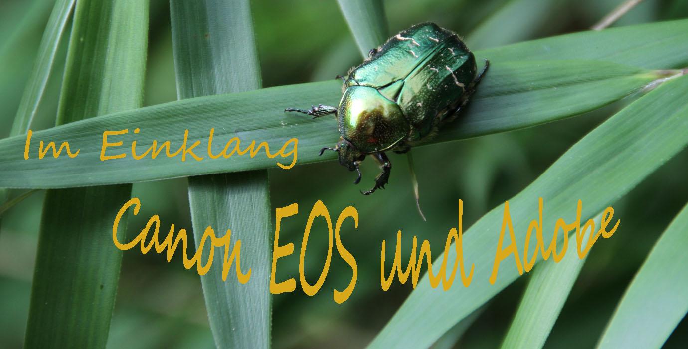 Mit der Canon EOS unterwegs zum Fotografieren und Filmen