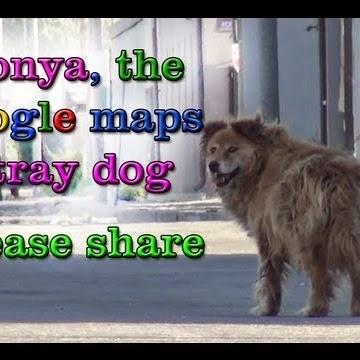 hope for paws, sonya, google maps, stray dog,