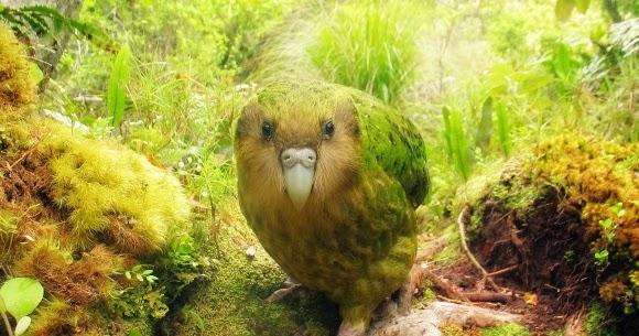 من أغرب الطيور في العالم