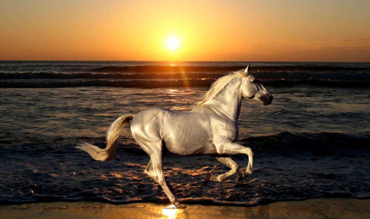 Good   Wallpaper Horse Steampunk - horse-wallpaper-hd  Picture_909991.jpg
