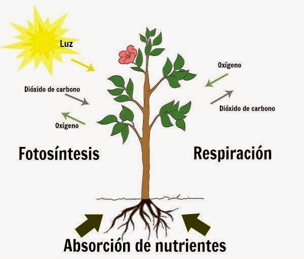 Noviembre 2014 guia de jardin blog de jardiner a y for Como aprender jardineria