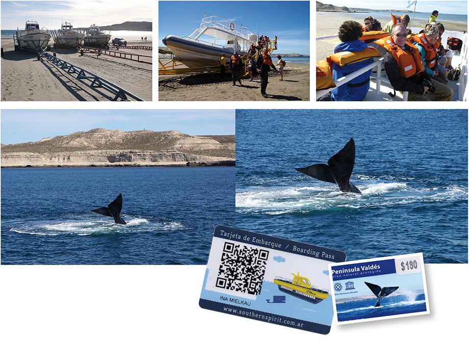 Ynas Reise Blog, Argentinien, Reisetagebuch, Peninsula Valdes, Whalewatching