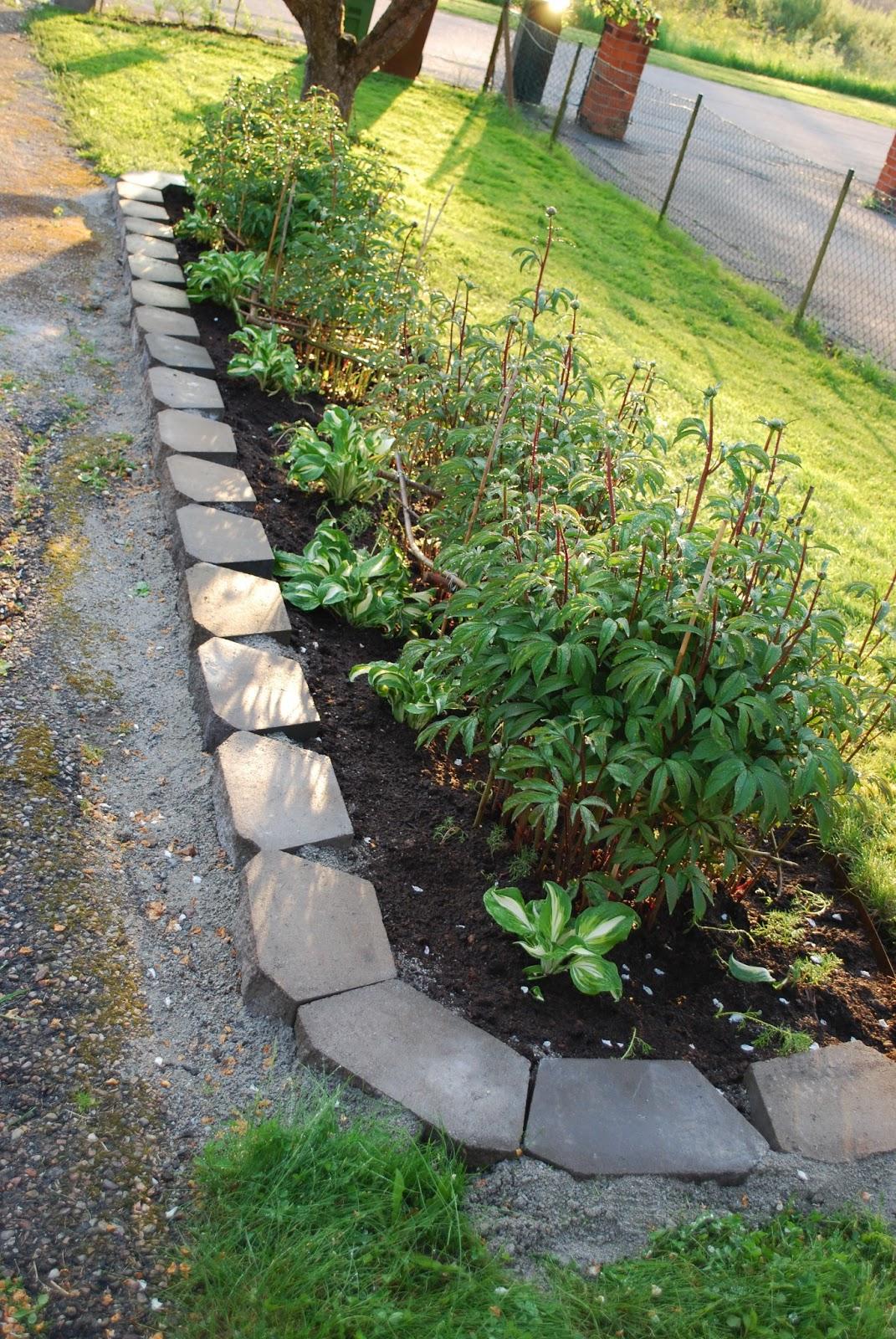 Merjas trädgård: pionrabatt före   efter