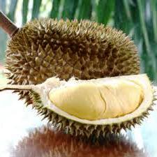 Menikmati Kemeriahan Festival Durian Lolong di Pekalongan