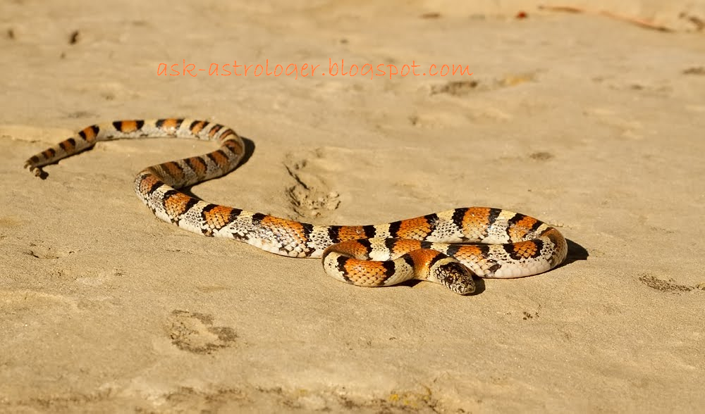 Why do snakes move in a zigzag Manner?
