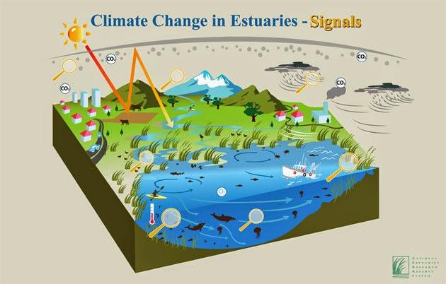Dampak Buruk Perubahan Iklim Menyebabkan Ikan Kehilangan Temannya