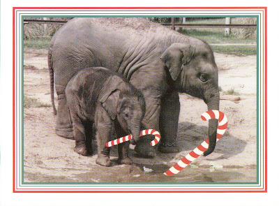 Image result for Elephants at Christmas