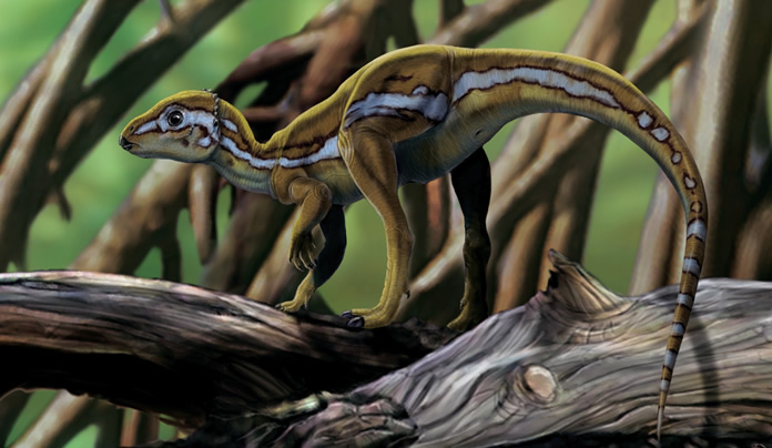 Micropachycephalosauro