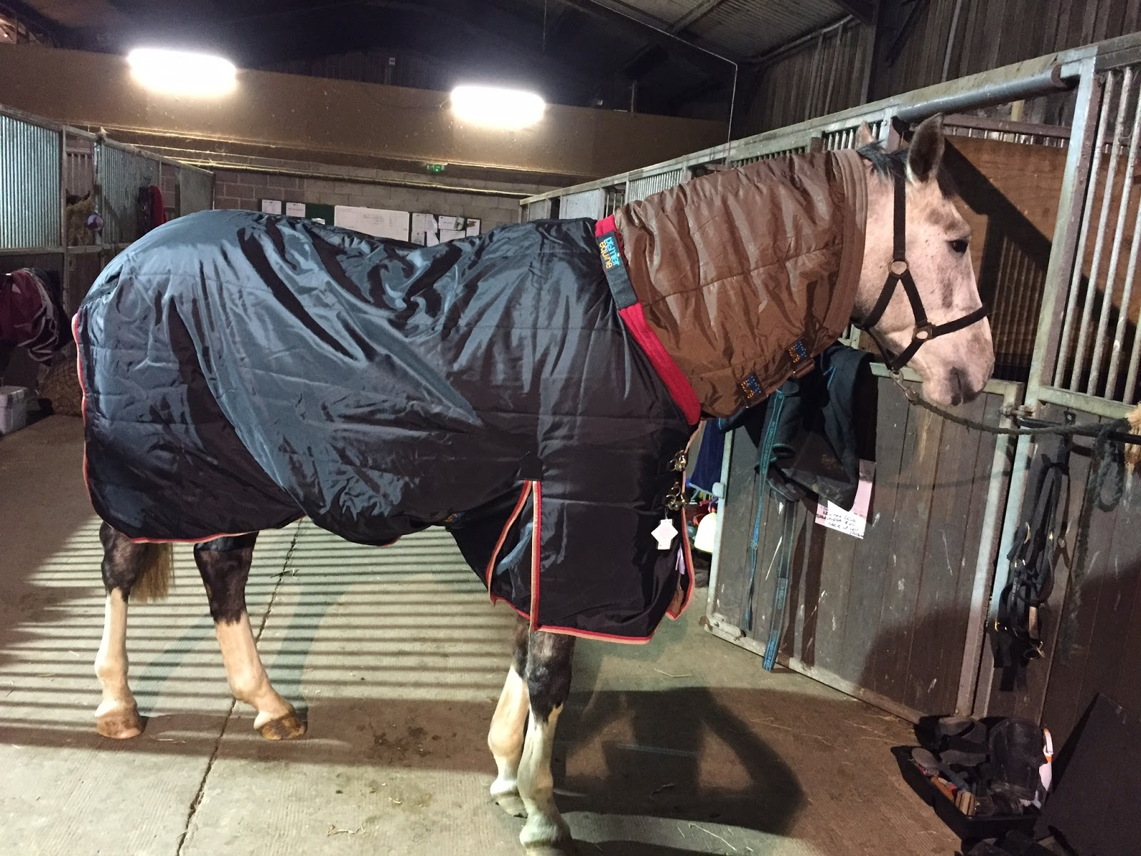Louie Sporting His Premier Equine Le Buster