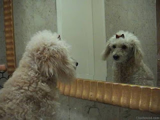 Funny Dog Looking In Mirror