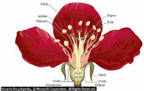... telur, tangkai putik,kepala putik kelopak bunga, mahkota bunga, benang