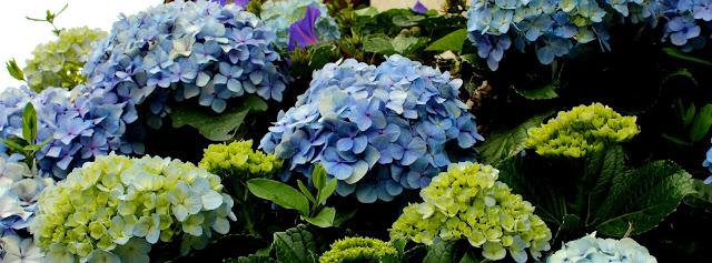 Imagem de flores azuis e roxas com folhas verdes e brotos