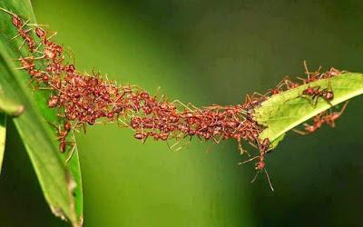 Semut Berbicara Didalam Alquran, Ilmuwan Membuktikannya