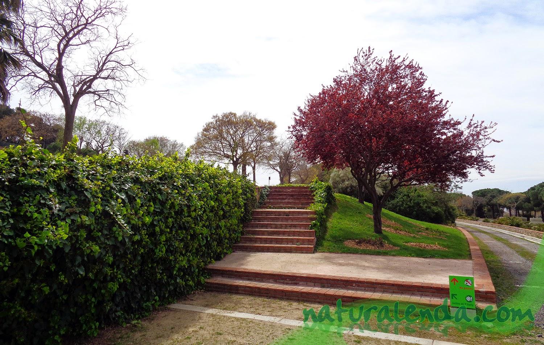 escaleras de ladrillo