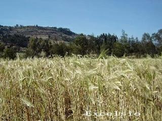 Sequía afecta más a los suelos con exceso de cultivos y ganado: IGAC