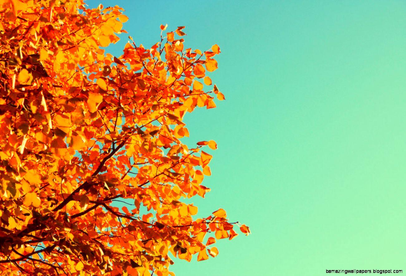 Autumn Tree Sky Tablet Phone Wallpaper Background   Album Art for
