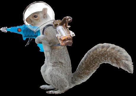 http://www.wayofthesquirrel.org/