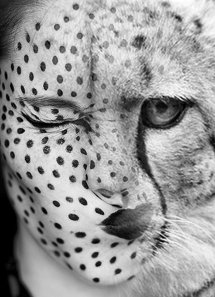 06-Cheetah-Antonio-Mora-Black-&-White-Photography-www-designstack-co