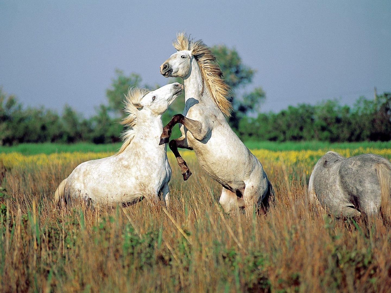 animals horse running free - photo #36