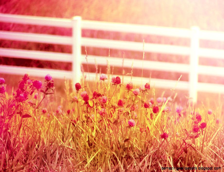 country summer tumblr amazing wallpapers