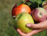 علاج الربو بالتفاح