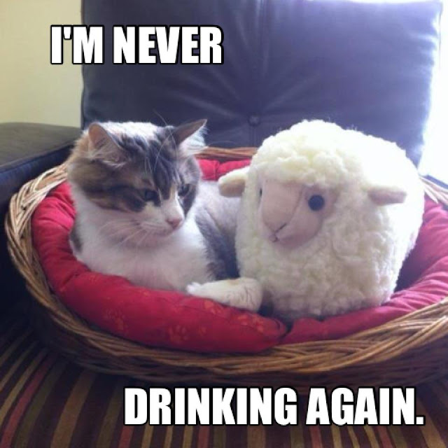 animal pictures with captions, lolcats, i'm never drinking again