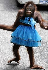 Esperen... esperen por favor, ustedes van a la boda??  por el apuro  olvidé ponerme los zapatos.
