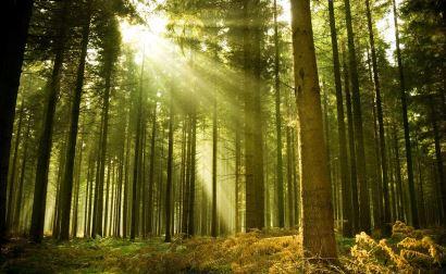 Planes Técnicos de Gestión Forestal