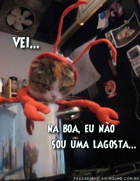 gato na panela, fantasia de lagosta