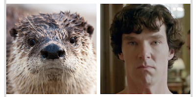 an otter who looks like Benedict Cumberbatch