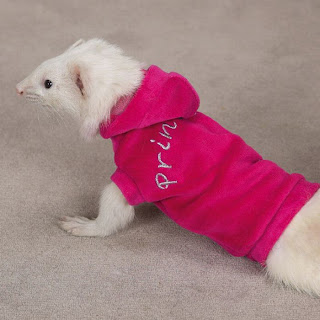 Funny Ferrets Dressed Up