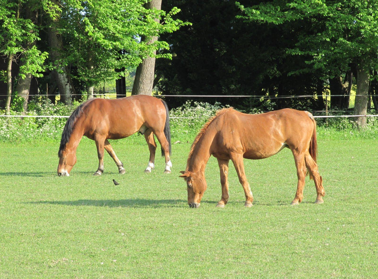 Le tocard 2 chevaux photo et fond d 39 cran gratuit - Chevaux gratuits ...
