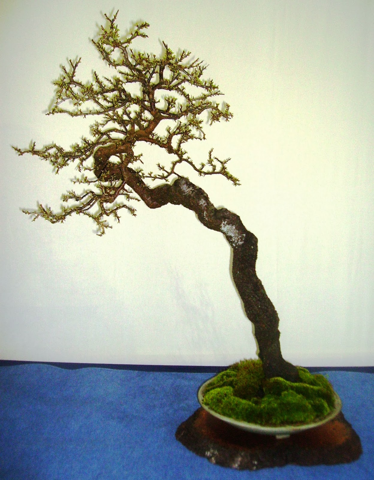 how to make a bonsai stand