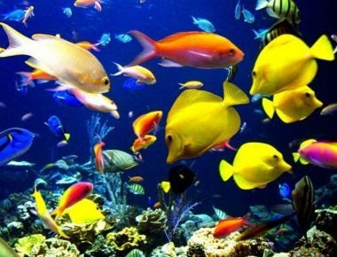 Doctor sonrisal acuarioterapia doctor sonrisal peces for Cria de peces ornamentales