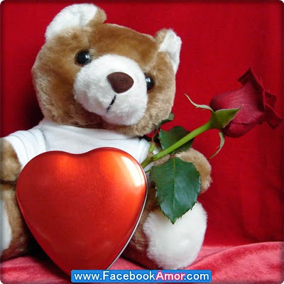 rosa roja con peluche para facebook