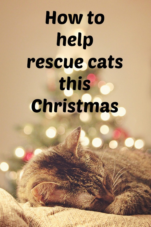 rescue cats brussels