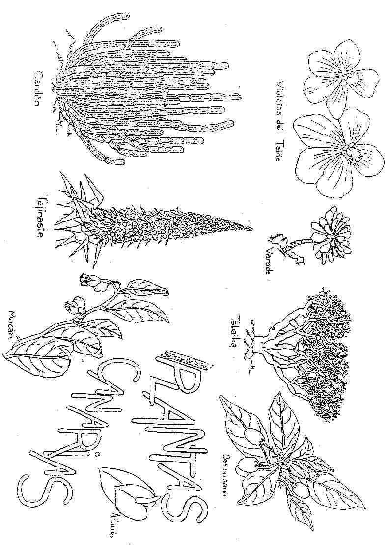 Dibujos e las islas canarias para colorear jugarycolorear - Islas canarias con ninos ...