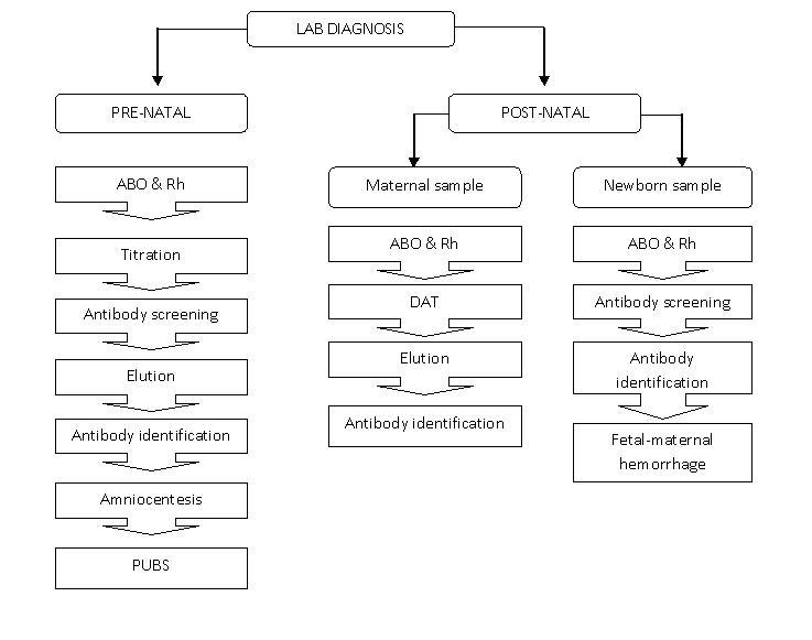 haemolytic disease of the foetus and newborn