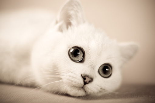 Jak zabezpieczyć kota przed kleszczami